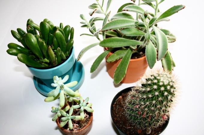 Casually Christiana Plants.jpg